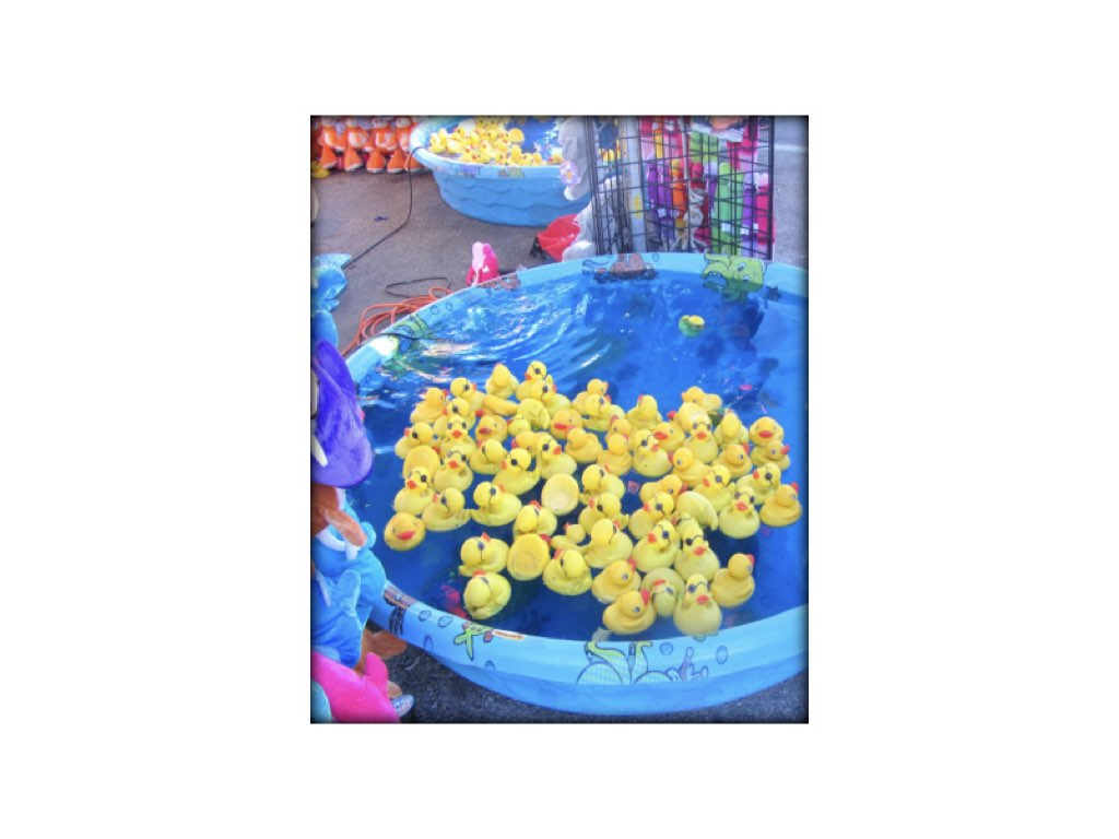 Duck Pond Image